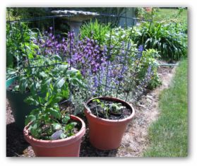 Build A Vegetable Garden Of Your Own
