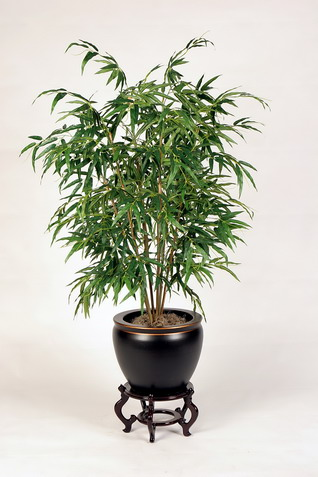 Bamboo Palm Provides The Same Benefit As The English Ivy. It Also  Eliminates Benzene, Carbon Monoxide, Xylene And Chloroform. Itu0027s A  Low Maintenance Plant ...