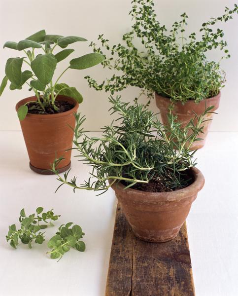 Kitchen Ingredients Helpful for Your Organic Garden
