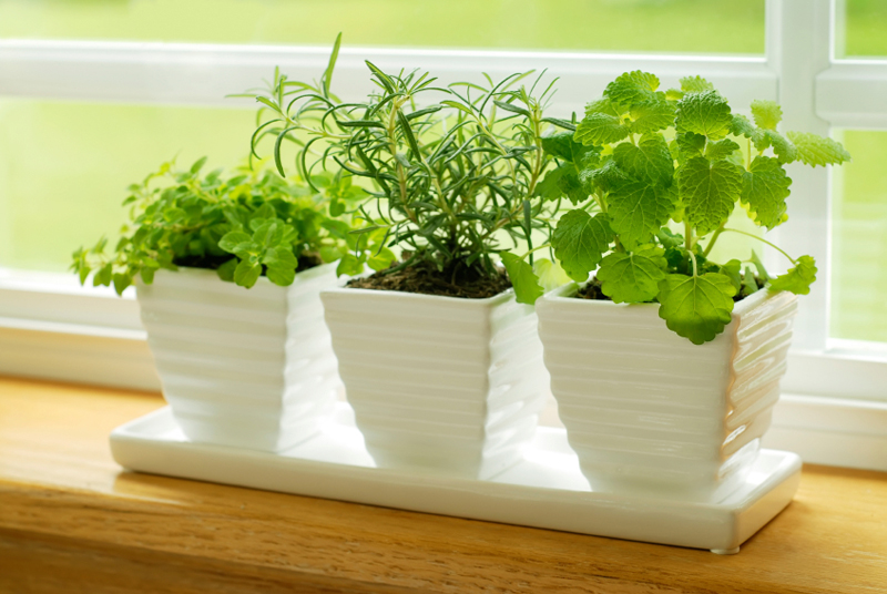 5 Herbs Worth Growing Indoors