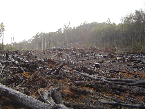 Deforestation and the Potential Threat It Poses to Medical Science
