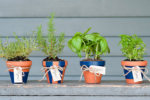 Potted-Herbs